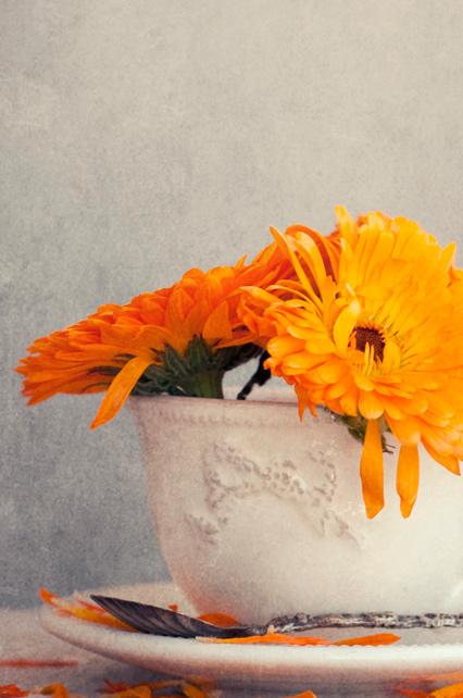 Ritratto della pianta Calendula, la base del nostro spray nasale
